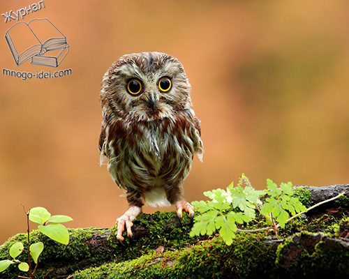 Unduh 640+  Gambar Burung Hantu Pakai Toga  Terbaik